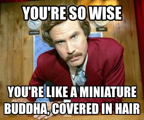 Funny Ron Burgundy Meme : It s all fun and games until you eat a bad clam ron burgundy